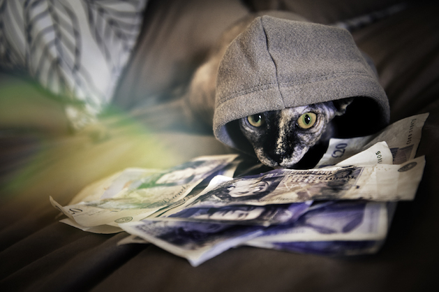cat in grey hoodie with cash