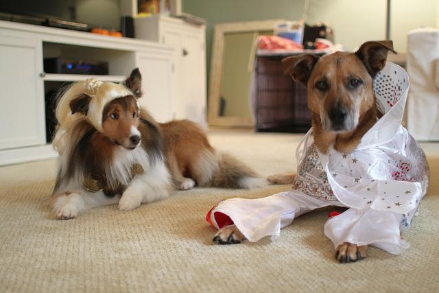 Dogs Dressed Like Rockstars