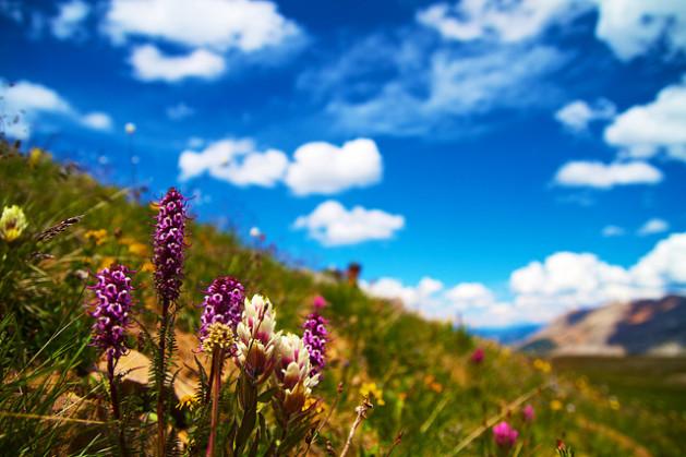 flowers on mountain