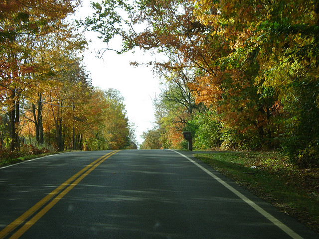 Tree-lined road in fall/autumn