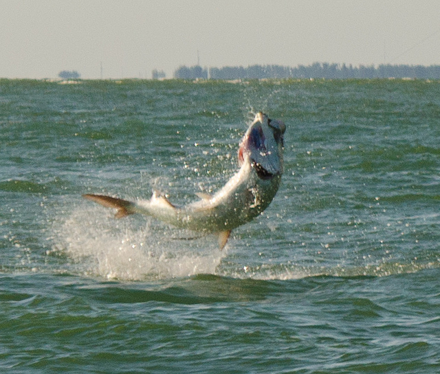 The 20 best fishing vacations in tthe united states for Best fishing vacations