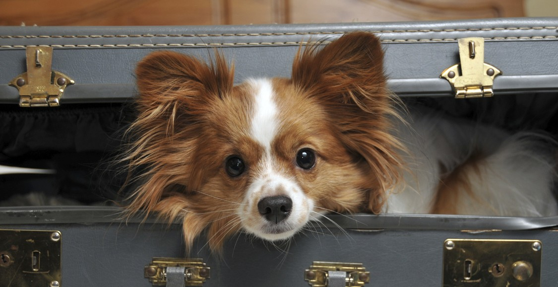 Pet Friendly Hotels Traveltune Co Uk