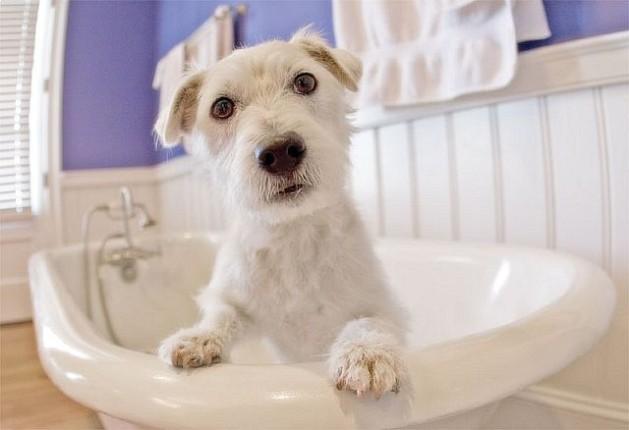 White dog in sink