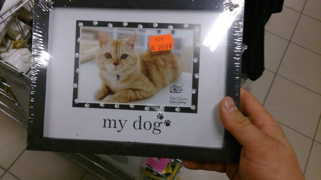 Cat picture in dog photo frame