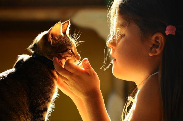 little girl playing with a cat's face
