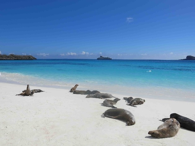 seals on beach with cruise ship in the background