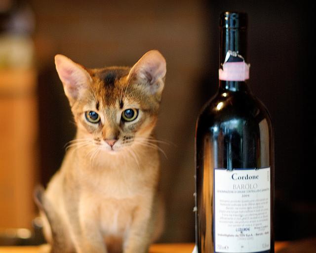 Kitten & Barolo