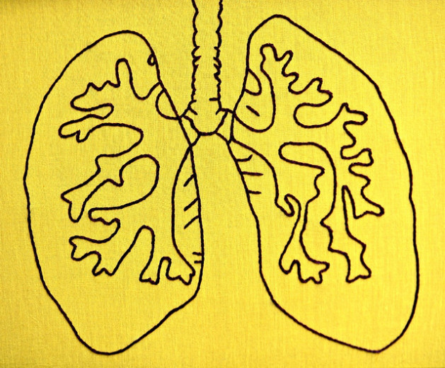 Large Scale Lungs, Framed Anatomy Embroidery