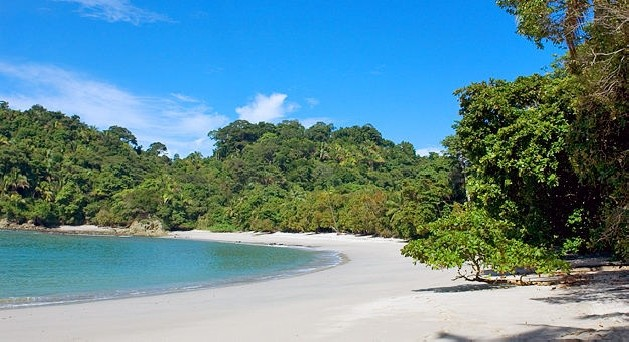 forest lined white sand beach in Costa Rica