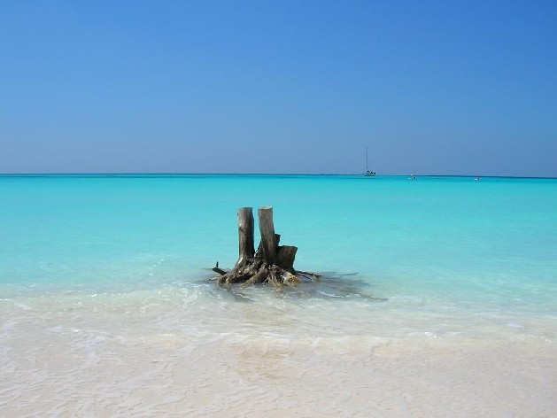 old tree stump on beach in water