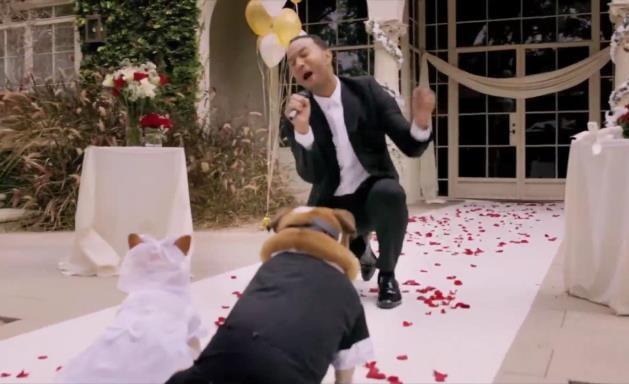 John Legend singing to dogs