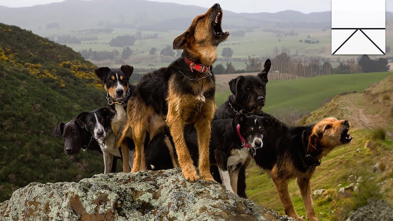 dogs on hill