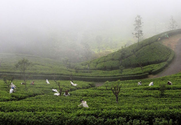 sri-lanka-tea-pickers-in-haputale-photo-01