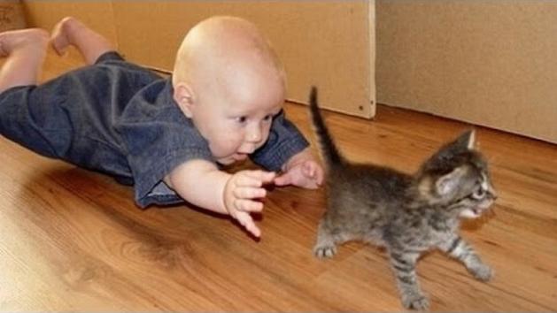 baby chasing kitten