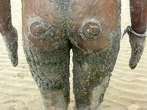 barnacle bum