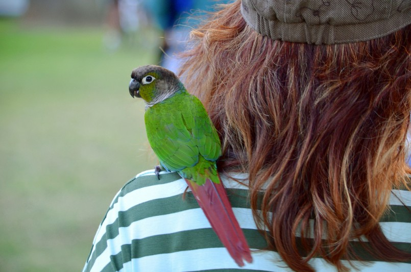 green parrot on shoulder of brunette girl with striped shirt