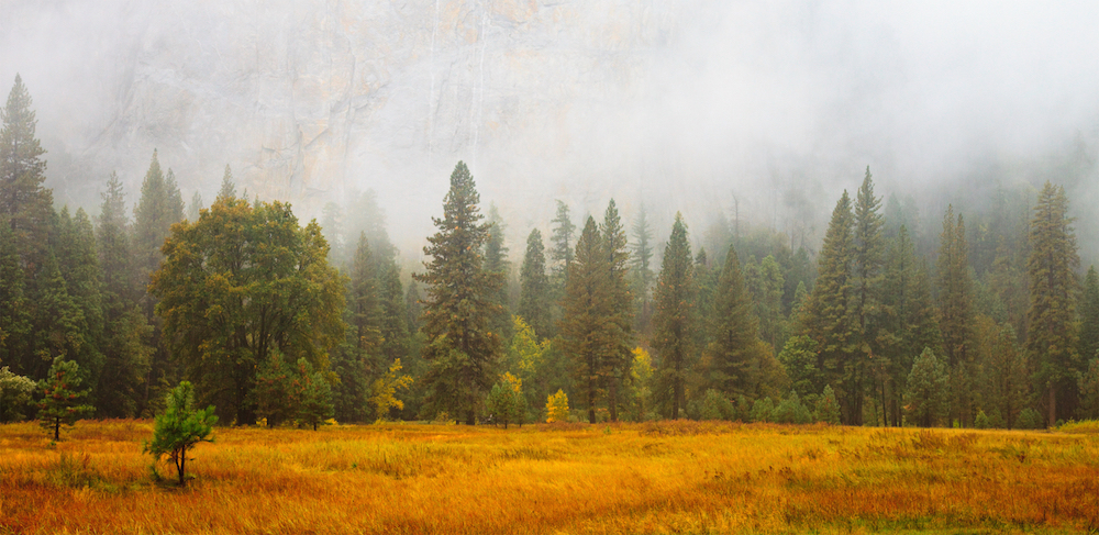 Mist on a rainy day in Yosemite National Park, California.