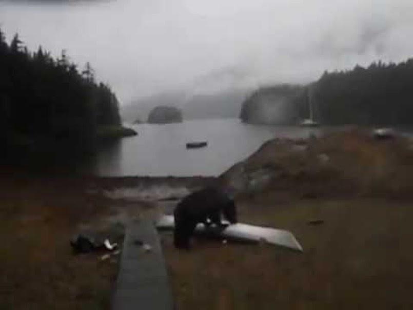 Woman Thanks Bear For Not Eating Her Kayak. Bear Then Eats ...