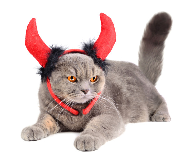 Portrait of British gray cat wearing a devil costume on white background  sc 1 st  Wably & 15 Videos That Prove Cats Are Evil and Canu0027t Be Trusted