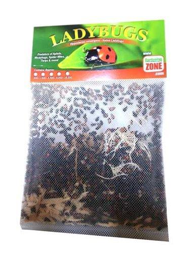 Ladybugs Amazon
