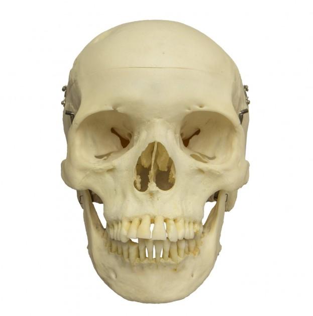 Skull Amazon