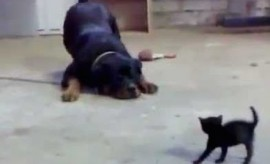 huge dog and small kitten