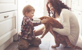 pet, home, cat, young, kid, floor, love, animal, care, mother, child, life, comfortable, parent, parenting, warm, kitchen, interior, feelings, sunlight, human, toddler, joyful, fun, touching, still, indoor, small, boy, adult, ginger, woman, son, motherhood, sitting, down, playing, people, living, smiling, family, lifestyle, childhood, playful, house, emotions, cheerful, domestic, childcare, happy