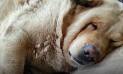 pup-snoring