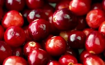 cranberries close up