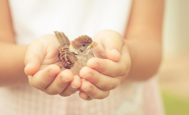 sparrow-sitting-in-childrens-hand