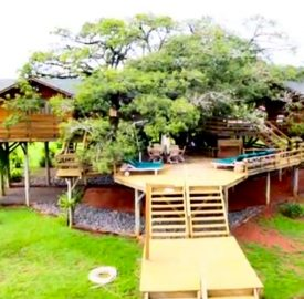 Pete Nelson treehouses