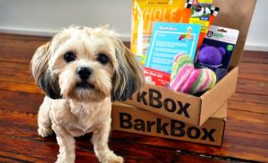 what is barkbox with small dog and dog toys
