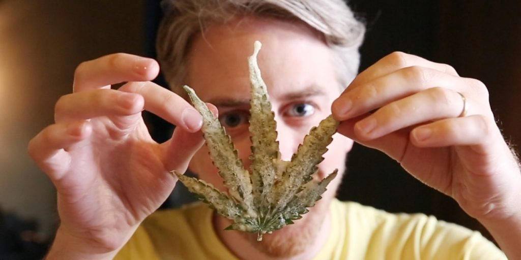 man holding up edible cannabis leaf